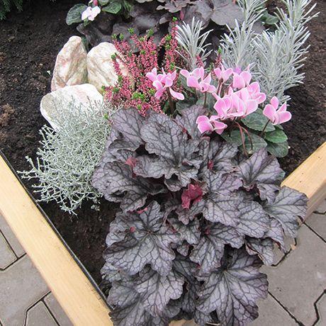 bildergebnis f r grabbepflanzung im herbst grabschmuck bepflanzung grabgestaltung und. Black Bedroom Furniture Sets. Home Design Ideas