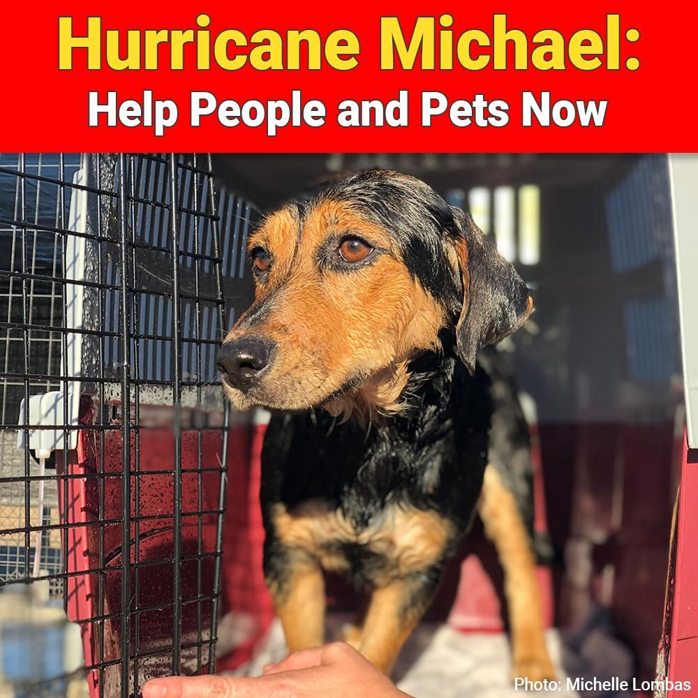 Hurricane Michael Help People and Pets Now / (Donate if