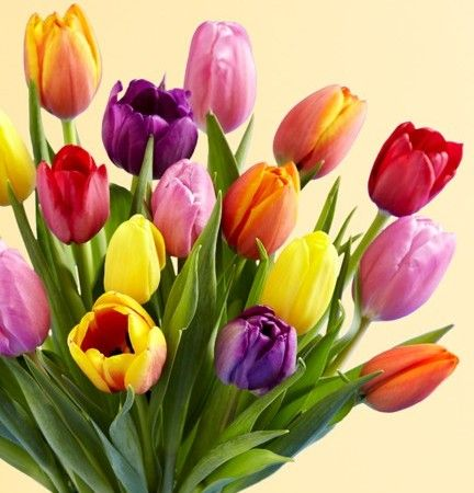 Spring flower varieties the first signs of spring color are spring flower varieties the first signs of spring color are bursting to provide an array mightylinksfo
