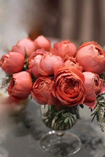 I love this color peonies all that glitters pinterest - Rosas color coral ...