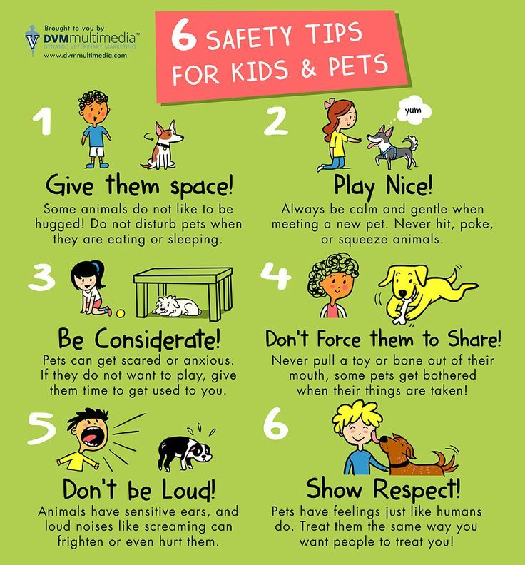 Rules of Dog Safety for Kids