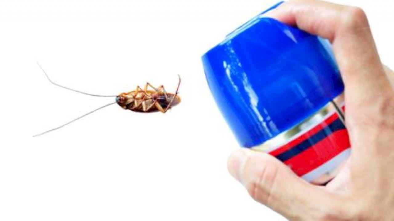 طريقة فعالة للقضاء على الصراصير Best Pest Control Pest Control Insect Spray