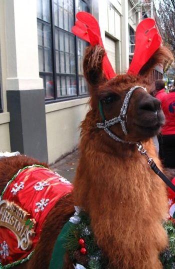 4th Day of Christmas: Christmas Llama! # ...
