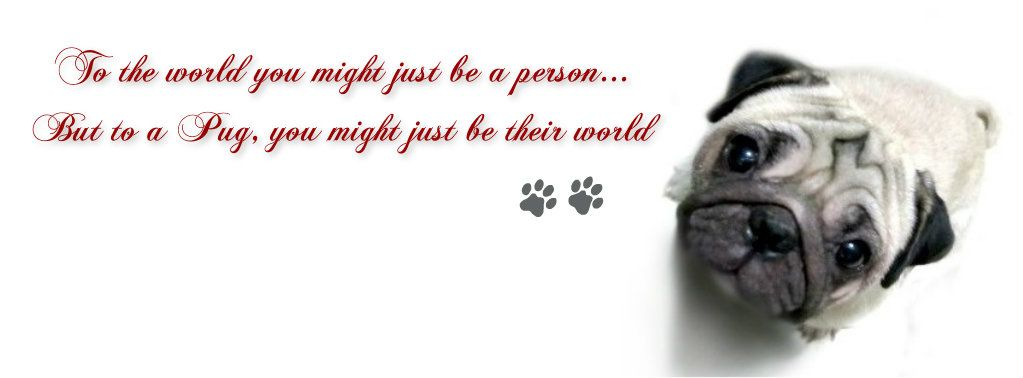 Pug Facebook Cover Photo For Your Timeline Pug Quotes Facebook