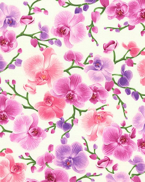 Equilter Orchid Phalaenopsis Sprays Cream Flower Background Wallpaper Purple Flowers Wallpaper Orchids