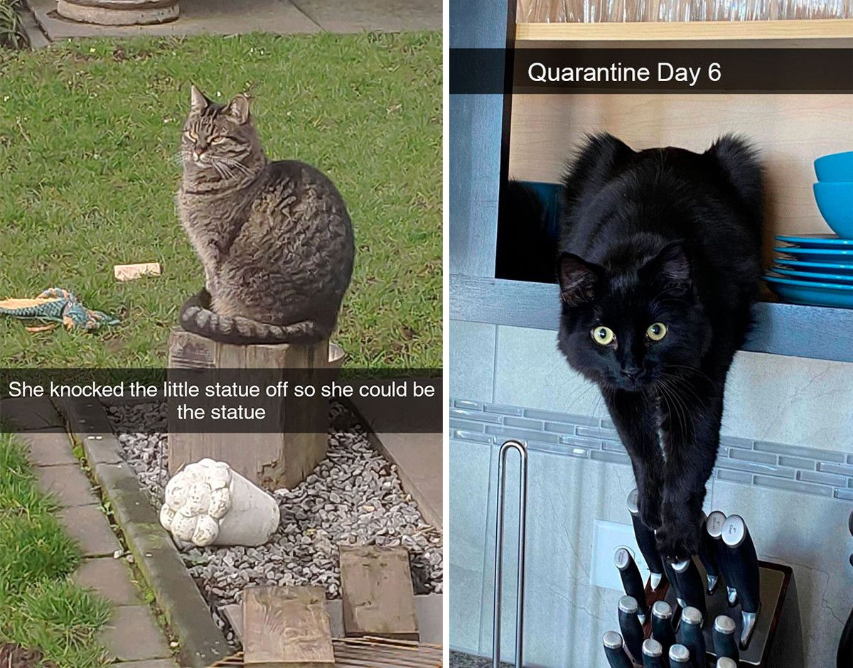 40 Funny Cat Snapchats Found On The Internet