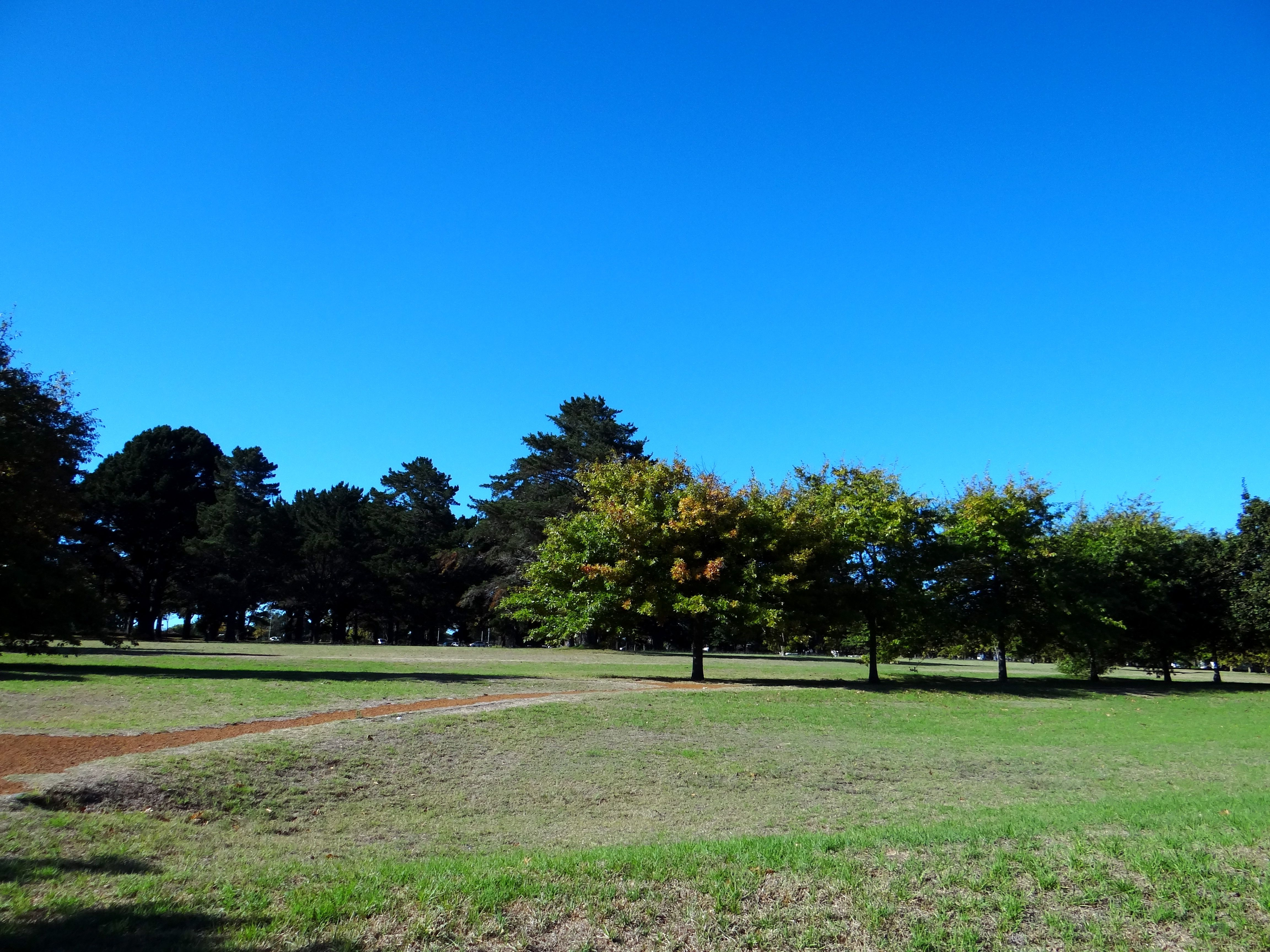 Alphen Common The Perfect Place For Pet Owners Moms And Tots And Picnic Lovers Constantia Property Perfect Place