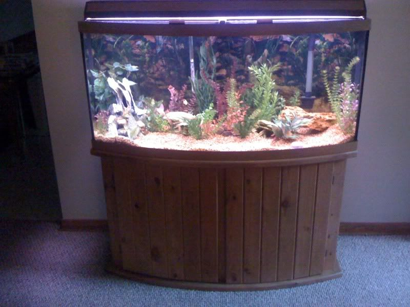 72 Gallon Bowfront Oak Aquarium Stand Everything Else Acurazine Community Fish Tank Stand Fish Tank Aquarium