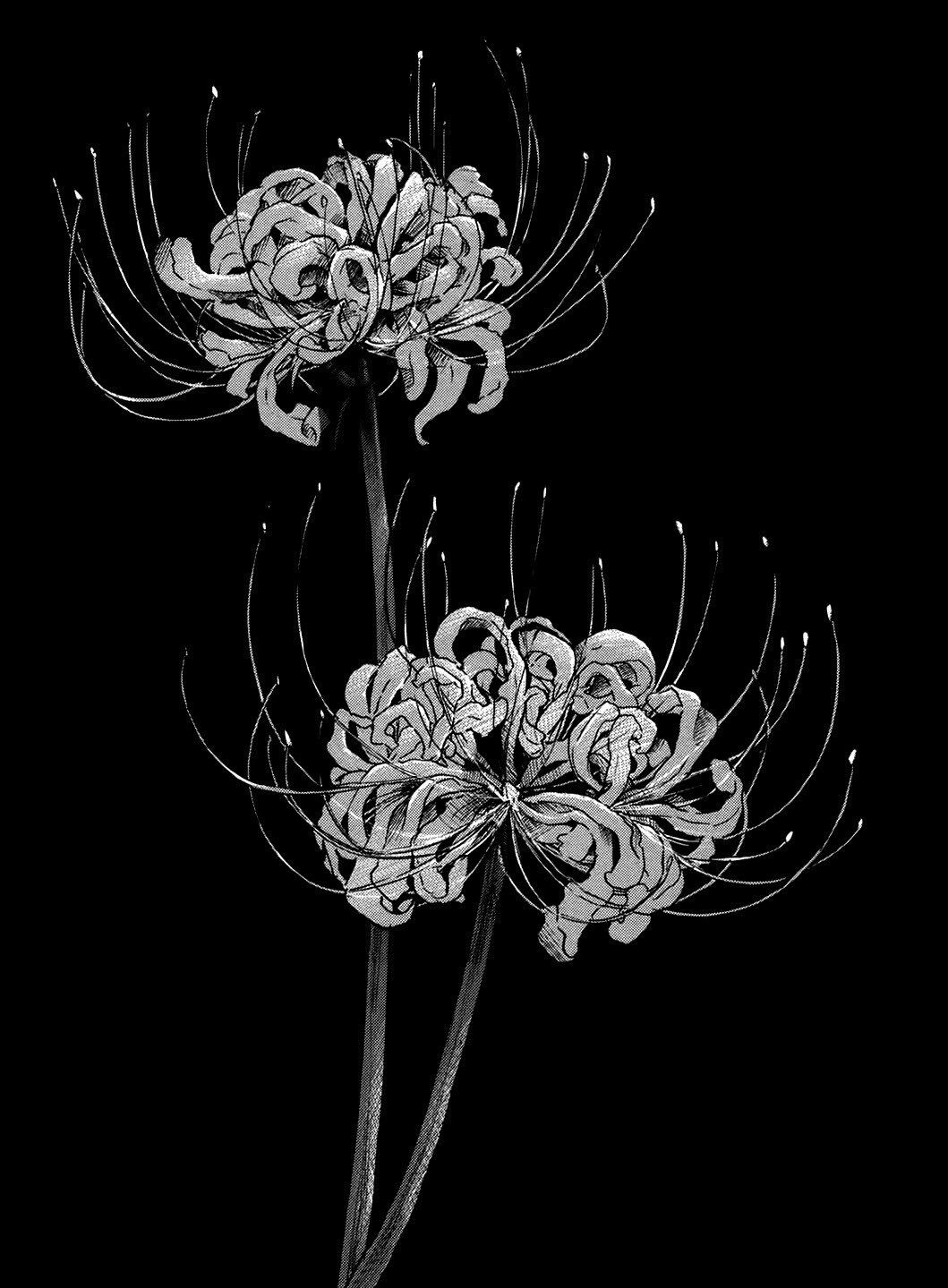 Sc On Twitter Red Spider Lily Spider Lily Tattoo Anime Monochrome Coolest lily flower wallpaper images