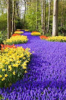 Keukenhof Garden is the largest flower garden in the world, Holland
