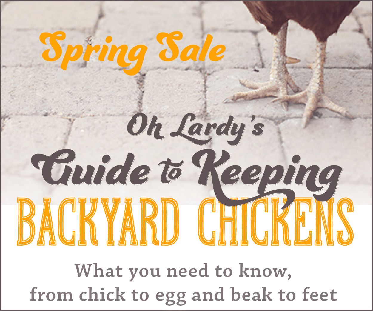 oh lardy u0027s guide to backyard chickens home backyard pinterest