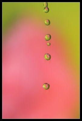 Goutte a goutte -  - Photo macro de gouttes d'eau