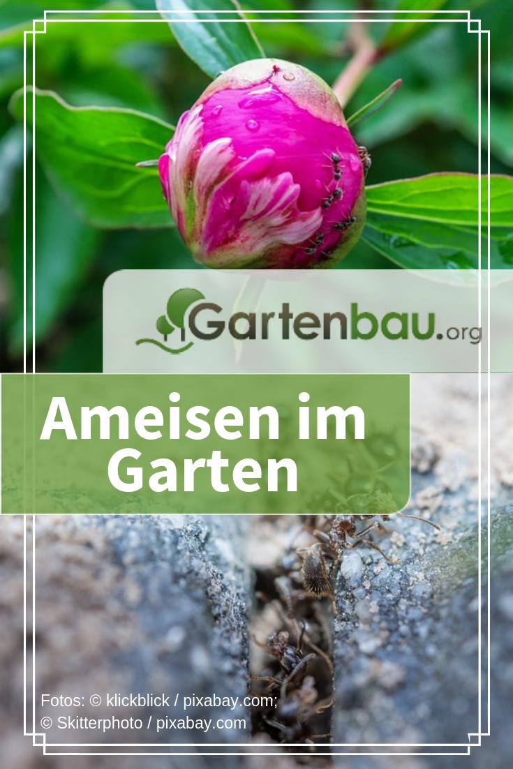 Gartenameisen Bekampfungstipps Mit Bildern Ameisen Im Garten Ameisen Im Hochbeet Ameisen