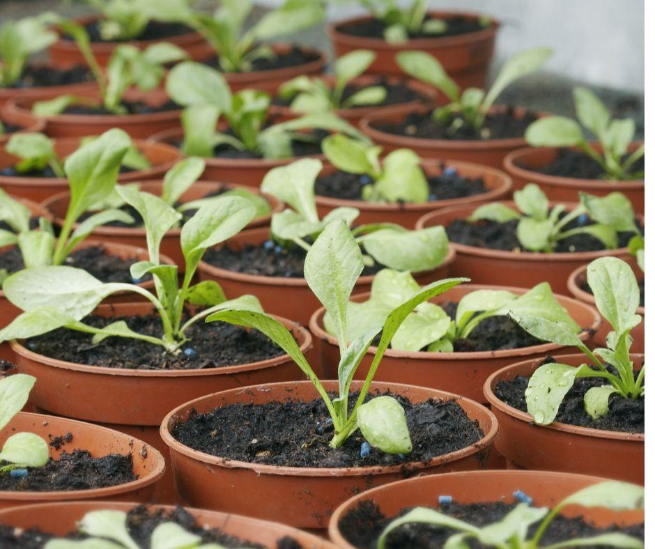 5 Vertical Vegetable Garden Ideas For Beginners: Beginner Gardener Mistakes To Avoid
