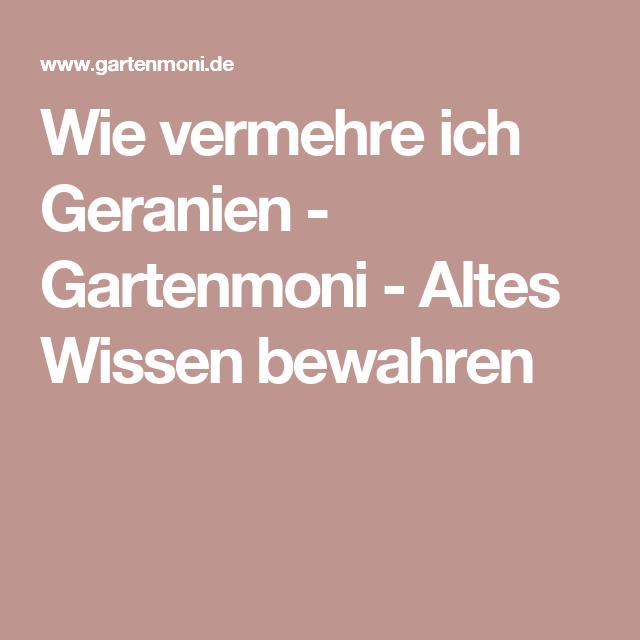 Wie vermehre ich Geranien - Gartenmoni - Altes Wissen bewahren