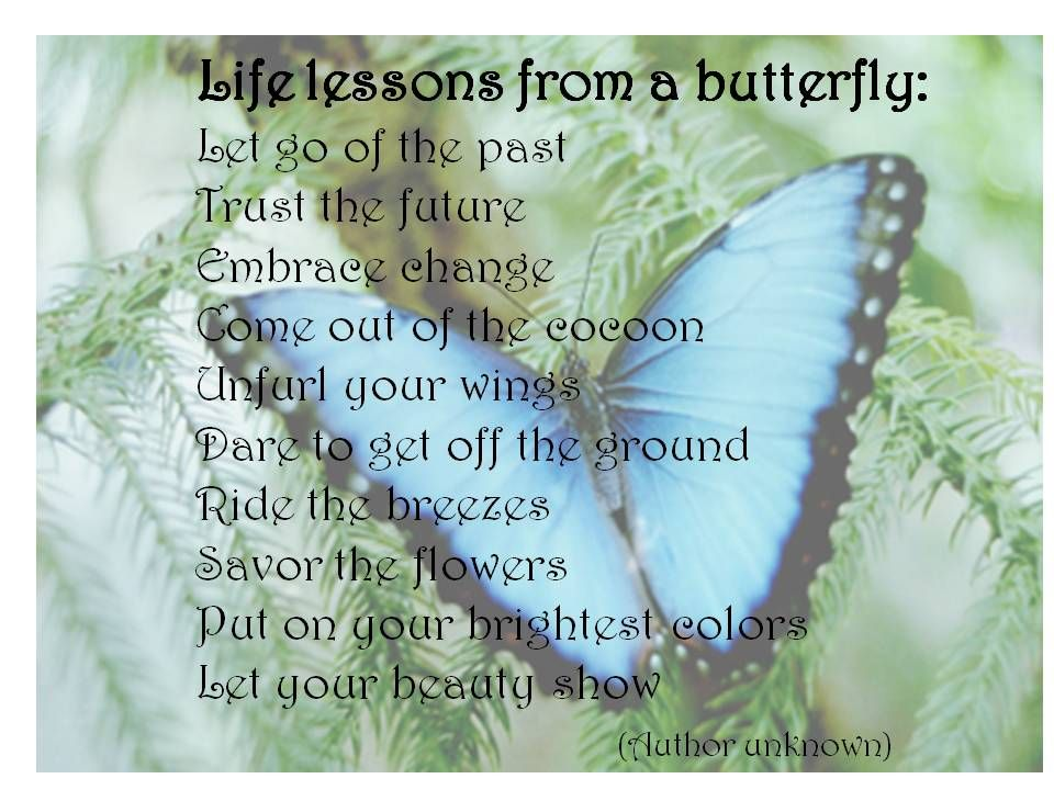 Quotes About Butterflies WISDOM LEARNINGS FROM MOTHER