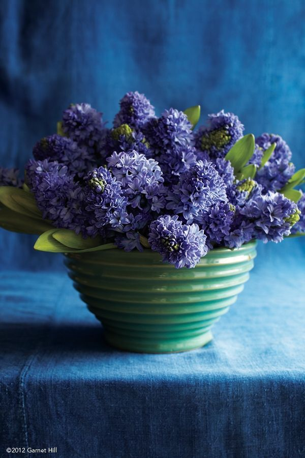 A simple bowl of Hyacinth