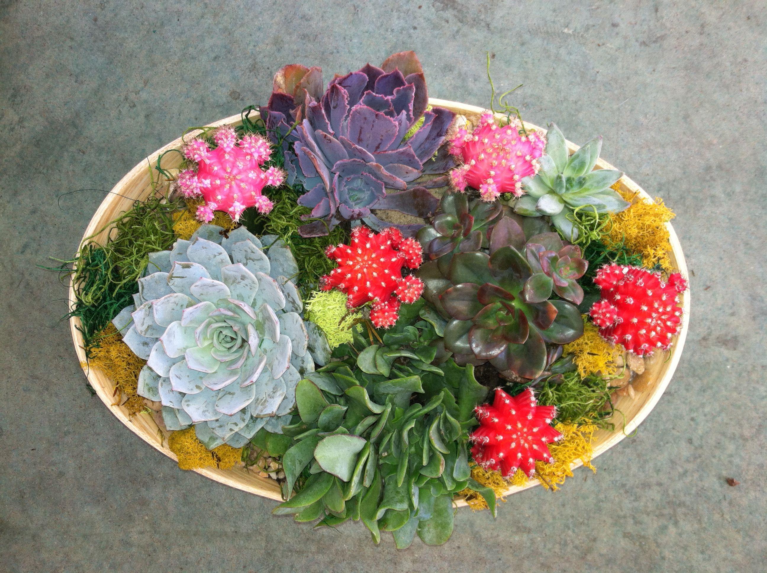 Succulents and moon cacti dish garden In House Garden Design