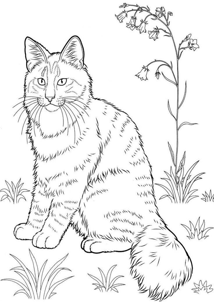 Realistic Cat Coloring Pages Realistic Kitten Coloring ...