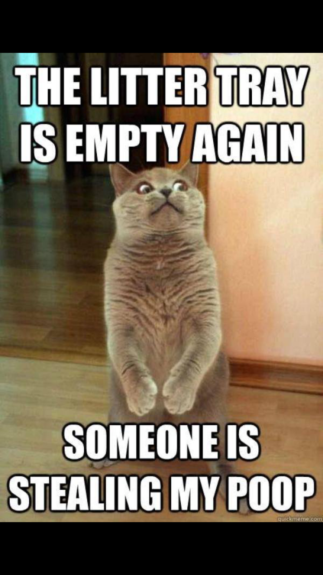 Pin by Shelley Smith on Funny Cute cat memes, Funny cat