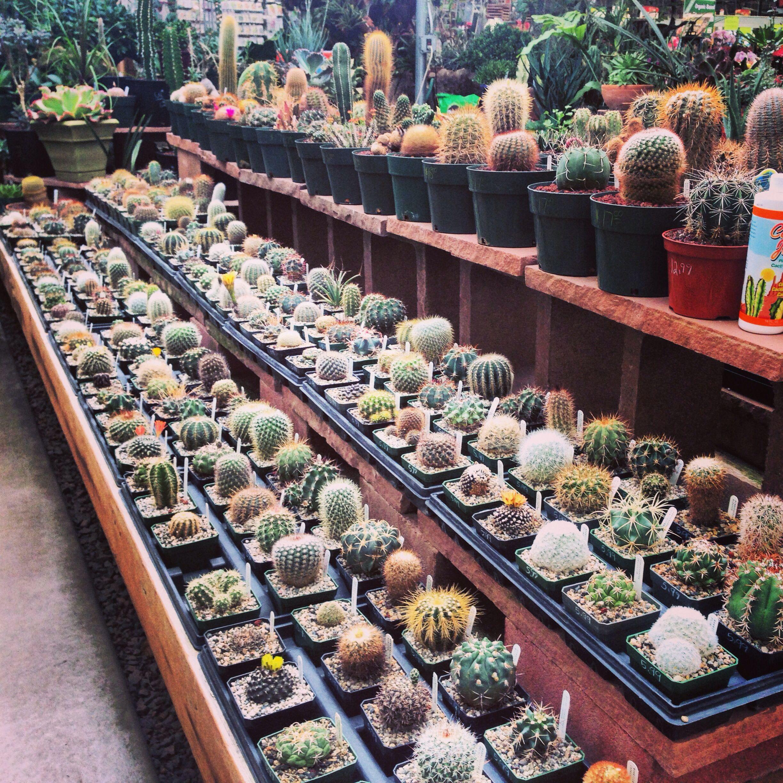 Cactus Paulino Gardens Denver