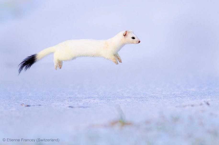 Winner From The 2013 Wildlife Photographer Of The Year
