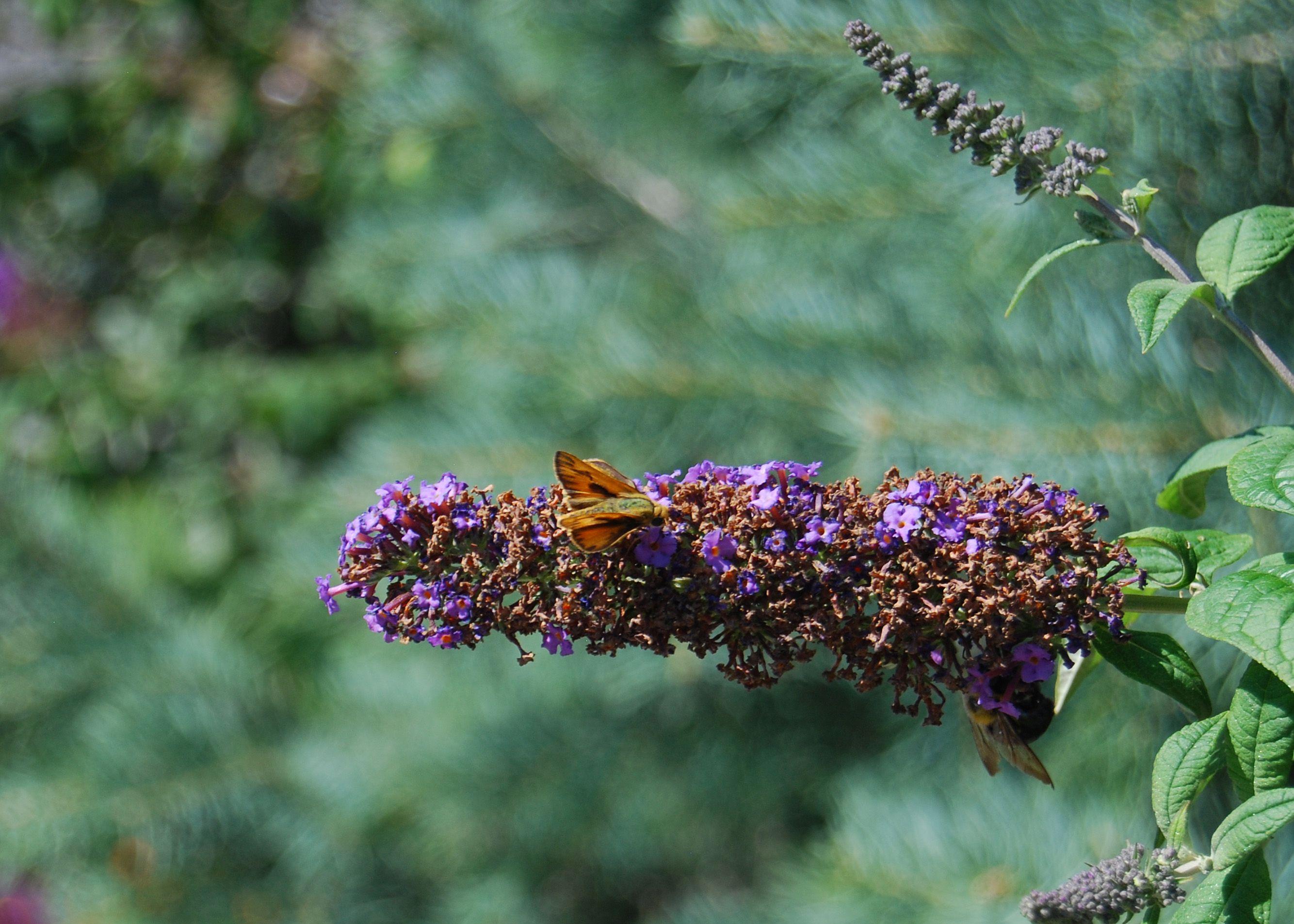 Butterfly art pinterest butterflies