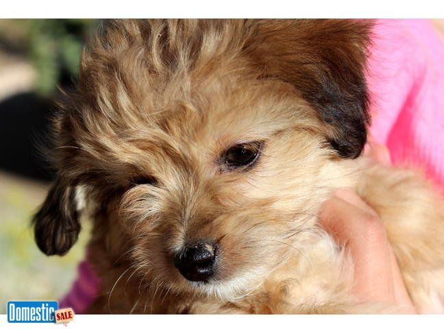 Reno Nevada United States Puppies For Sale Puppies I Love Dogs