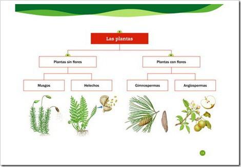 Clasificación De Las Plantas Plants Rih Image
