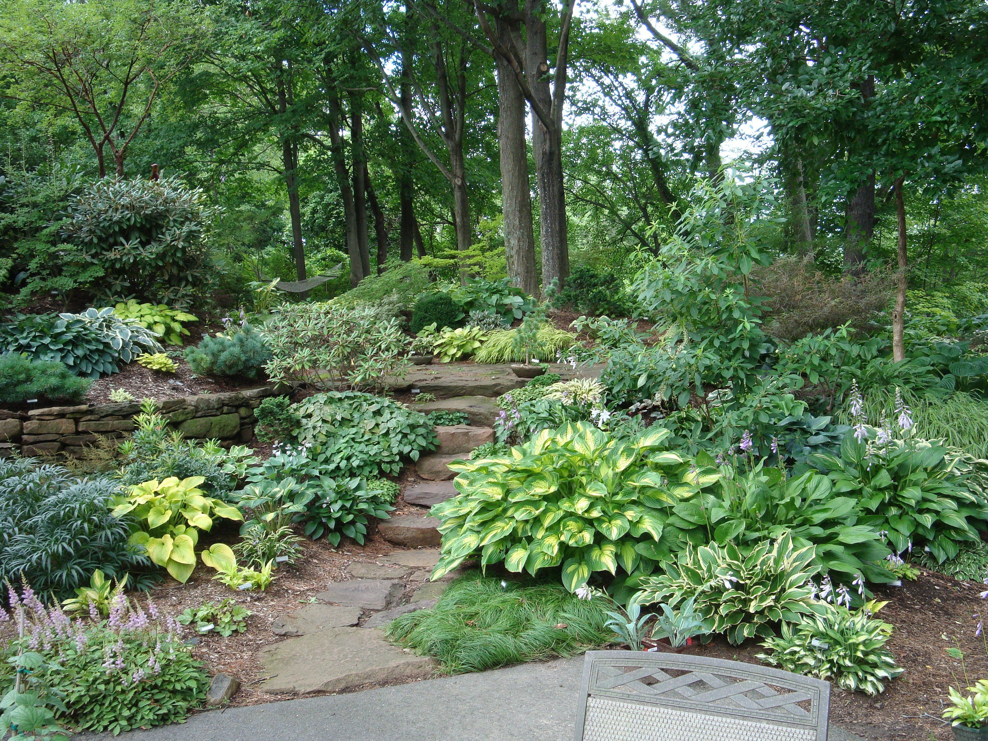 Nice Full Shade Garden #2: Rich, Full Colors Of The Shade ...