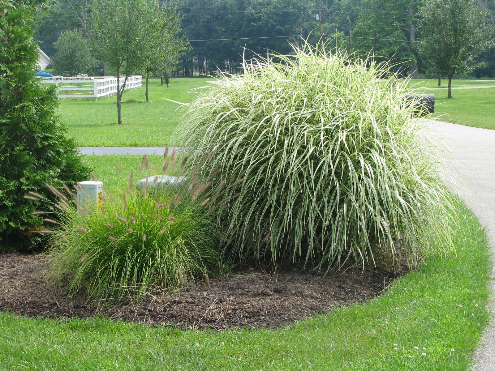 Gardeing with ornamental grass ornamental grass or grasses garden gardeing with ornamental grass ornamental grass or grasses garden directory nursery source finder workwithnaturefo