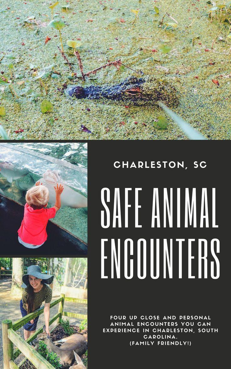 See the animals of Charleston, South Carolina Family