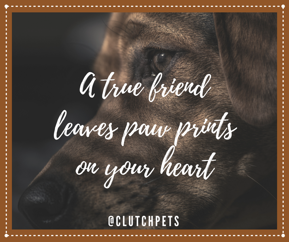Pin By Quality Veterinarians Near You On Pet Lover Quotes With