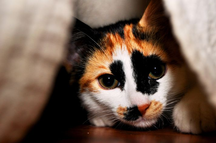 How To Help Young Cats Overcome Their Fear - Petcha