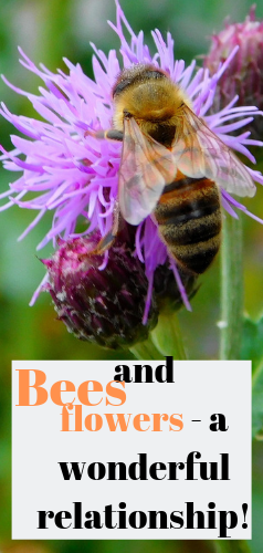 The bees and flowers have a complicated and beneficial