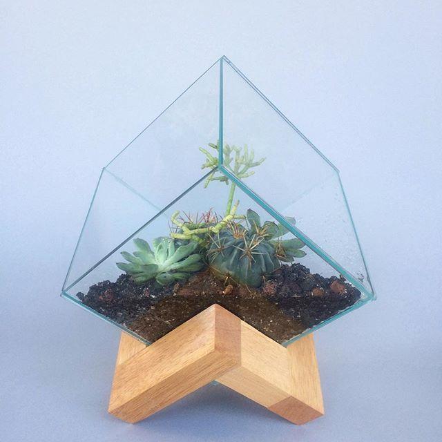 Terrario Cubo De Vidrio En Base Madera Con Plantas Suculentas Y Cactus Venta En Bunamx Cdmx Mexico Terrarium Ter Terrarios Ideas De Jardinería Plantas