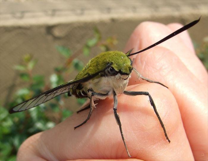 キモイ可愛い きもかわいい虫たち 昆虫画像50枚 Ailovei 虫 アニマルキングダム 蛾