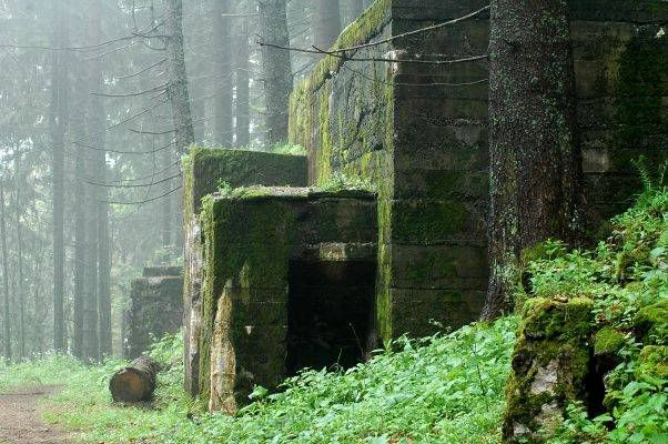 Wwi Vosges German Block House At The Chemin Des Abris Tree Abandoned Tree Trunk