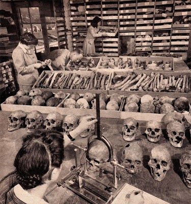The Nephilim Chronicles: Fallen Angels in the Ohio Valley: Skulls with Double Rows of Teeth Uncovered on Santa Rosa Island
