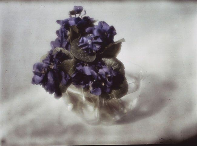 Kuehn - Still-Life with Violets, ca. 1908