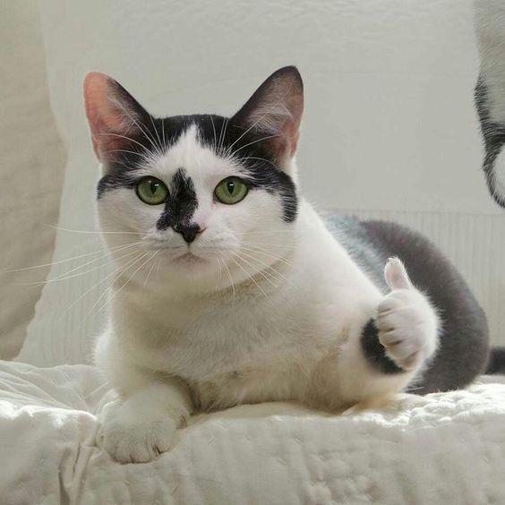 Pin By O K Good On Memes De Gatos Fofos Engracados Cute Cat Gif Cute Cats Cute Baby Animals