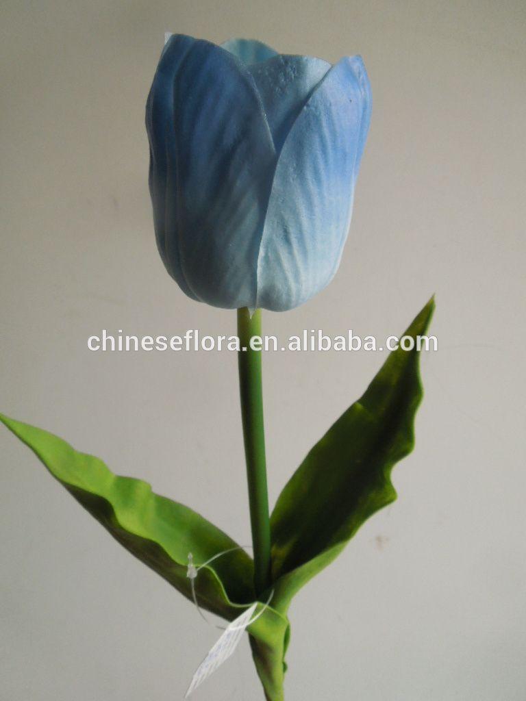 Gambar Bunga Tulip Warna Biru Gambar Bunga Hd Bunga Tulip Gambar Bunga Bunga