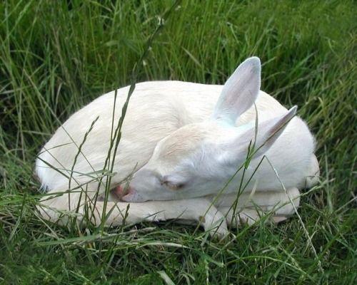 Savoring Life's Sweetness, happycottage: Albino deer ♡ #albinoanimals
