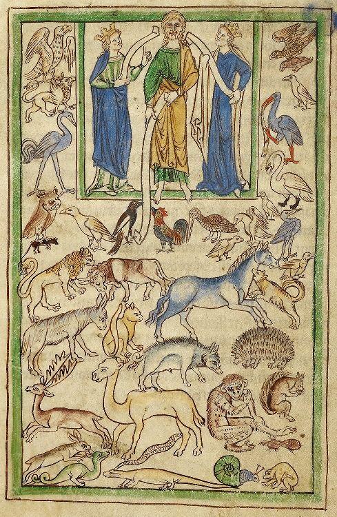 Northumberland Bestiary, about 1250 - 1260