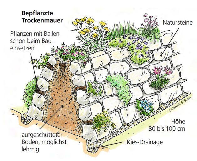 Bepflanzte trockenmauer pflanzideen pinterest garten for Naturnaher garten anlegen