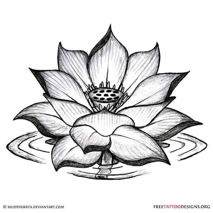 Black Lotus Flower Tattoo Designs Valoblogicom