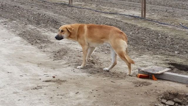 Can you imagine what a dog feels like after they are abandoned by the people they consider as family? It must be very confusing for the poor dogs. It's such a heartbreaking scene watching the abandoned dogs roaming around, probably …