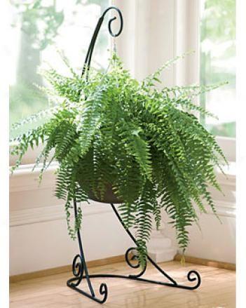 Border Fence Value Pack Gardening Online Catalog Indoor Hanging