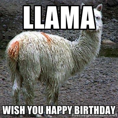 cb517421b971e2a61cb6d274579d7b4b llama wish you happy birthday drama llama meme generator,Alpaca Meme Generator