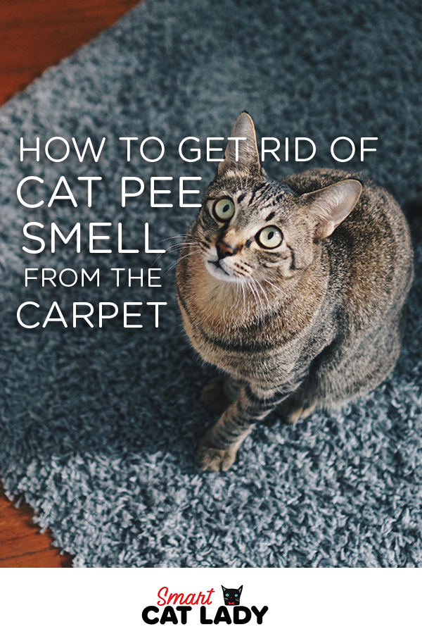 How To Get Rid Of Cat Pee Smell From Carpet Cat Pee Smell Cat Pee Cat Ages